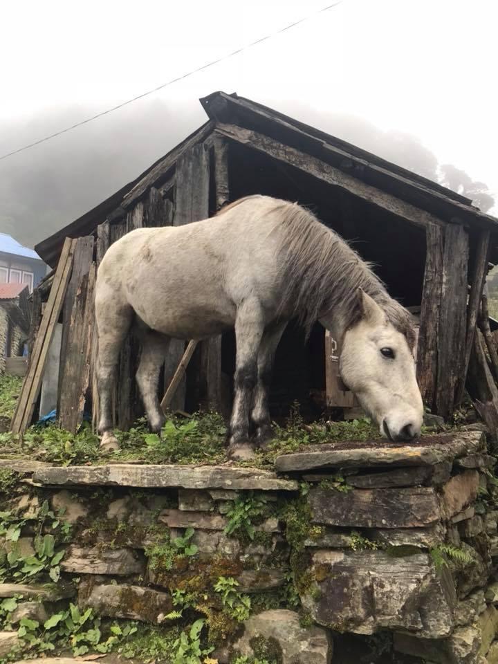 Charity Trek Horse